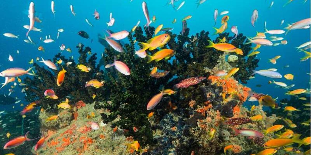 Coral Garden Inhaca Island